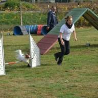 agility 3