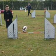 agility 6